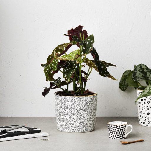 Katie Leamon B&W Confetti planter